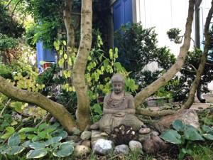 Buddhabaum_HHöch_b_4017_500